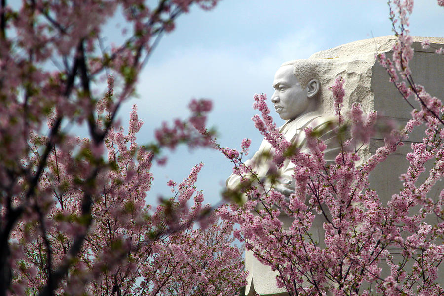 Cherry Blossoms Photograph - Infinite Hope by Mitch Cat