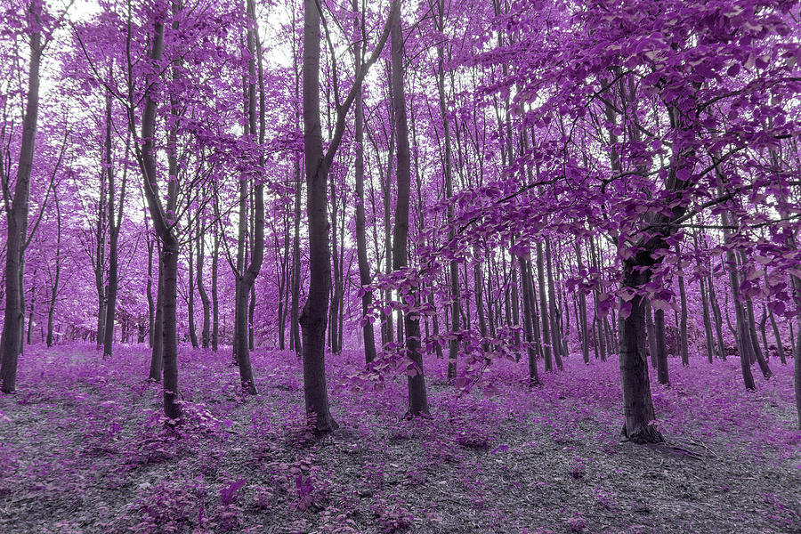 Infra Red Forest In Purple Colors Digital Art