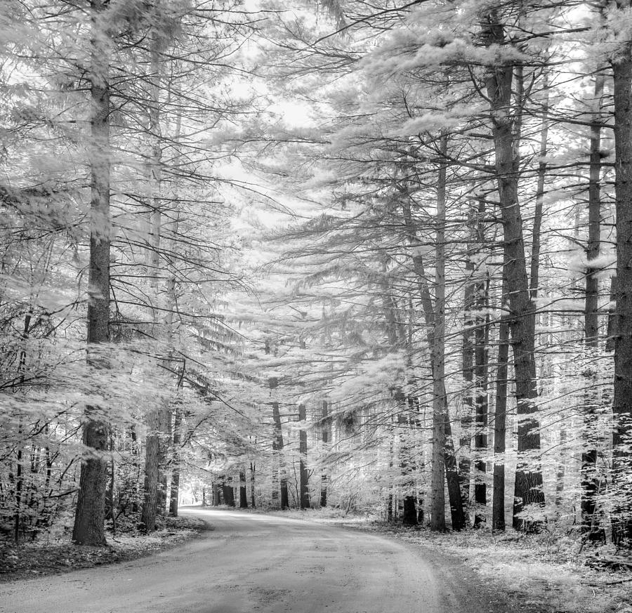 Trees Photograph - Infrared Entrance Road by Gunther Schabestiel