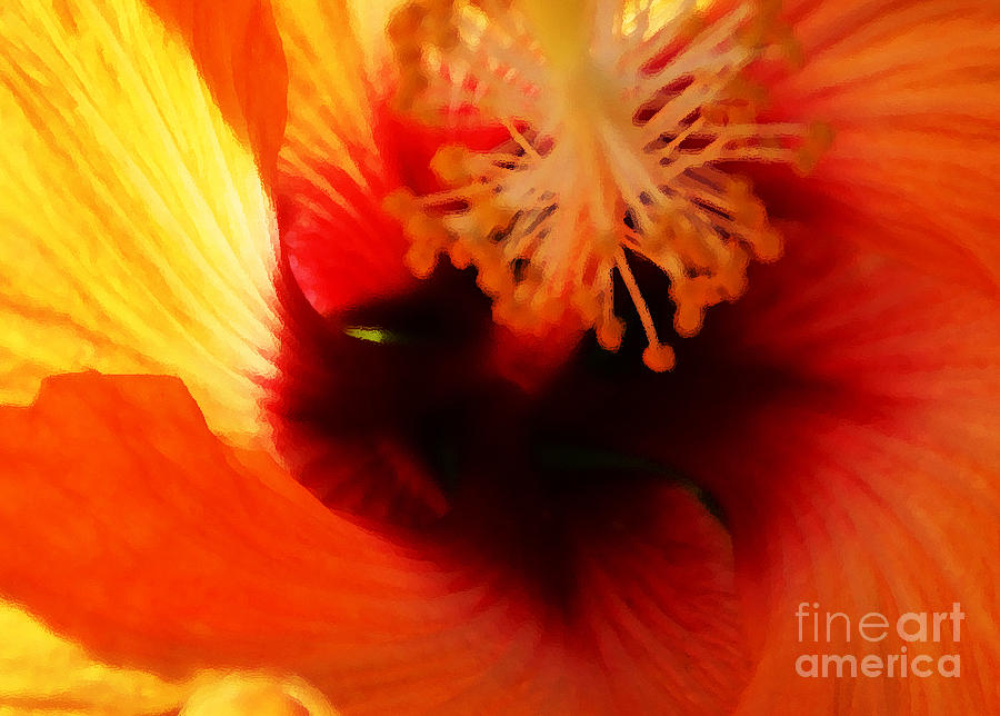 Hibiscus Photograph - Inner Beauty by Linda Shafer
