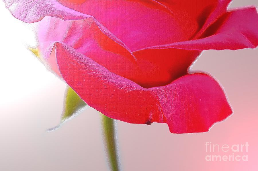 Rose Photograph - Innocence Of Love by Krissy Katsimbras
