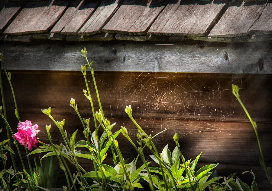 Suburbanscenes Photograph - Insect - Spider - Charlottes Web by Mike Savad