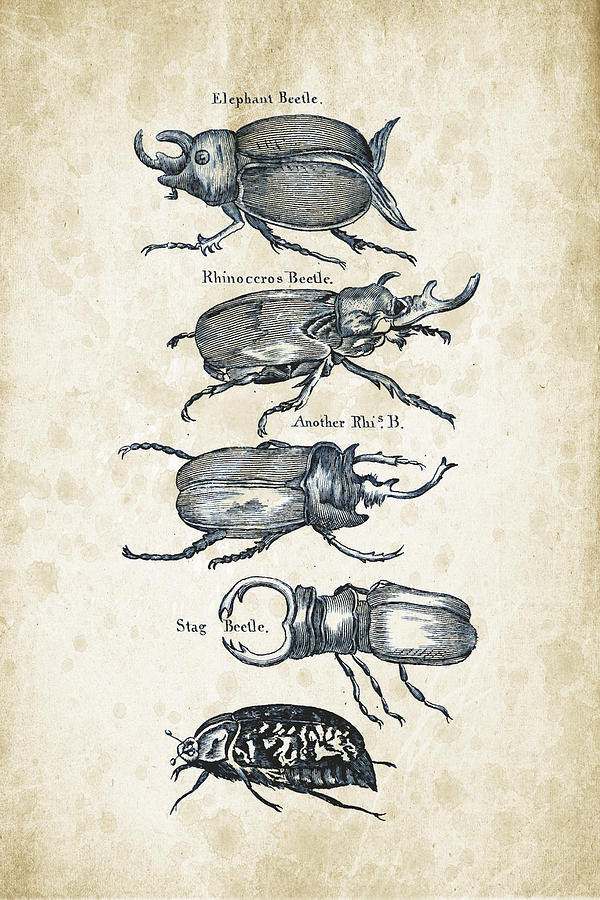 Insects - 1792 - 01 Digital Art