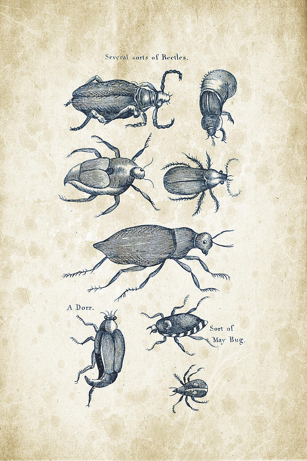 Insects - 1792 - 02 Digital Art