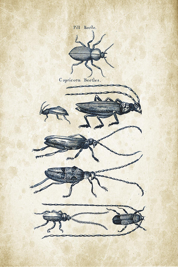 Insects - 1792 - 03 Digital Art