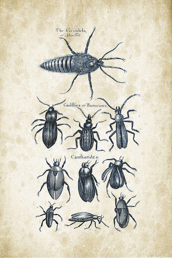 Insects - 1792 - 04 Digital Art