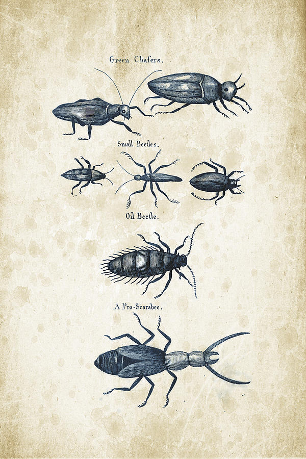 Beetle Digital Art - Insects - 1792 - 05 by Aged Pixel