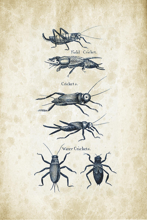 Beetle Digital Art - Insects - 1792 - 06 by Aged Pixel