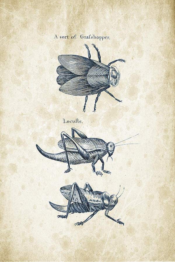 Insects - 1792 - 08 Digital Art