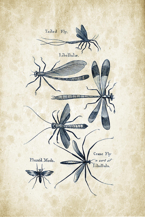 Beetle Digital Art - Insects - 1792 - 11 by Aged Pixel