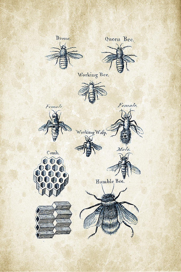 Bee Digital Art - Insects - 1792 - 14 by Aged Pixel