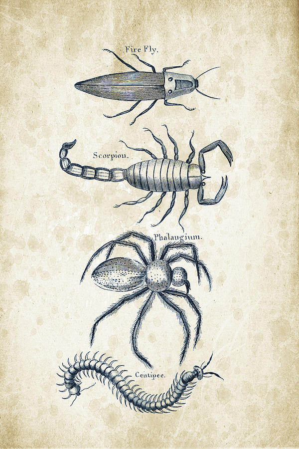 Insects - 1792 - 19 Digital Art