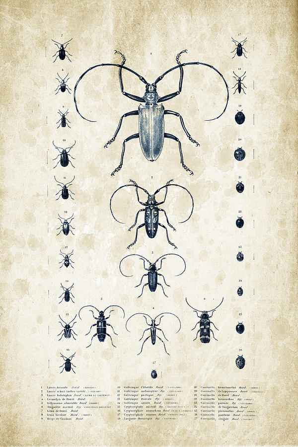 Beetle Digital Art - Insects - 1832 - 08 by Aged Pixel