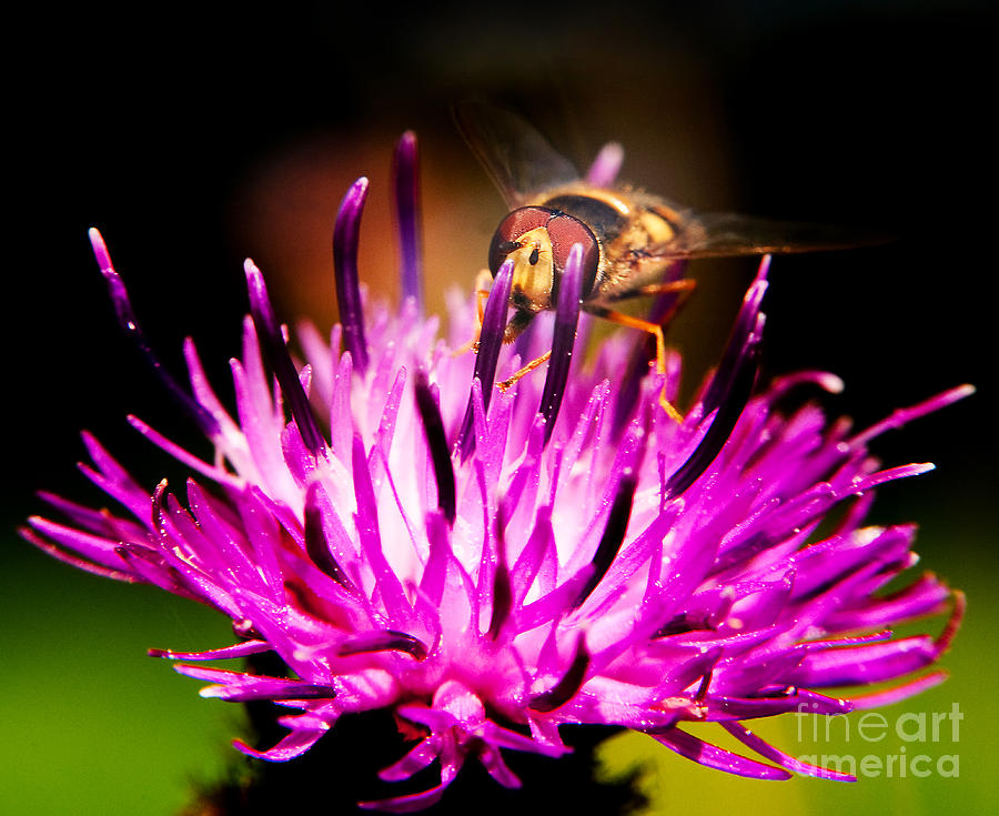 Fly Photograph - Insects Up Close by Chris Smith