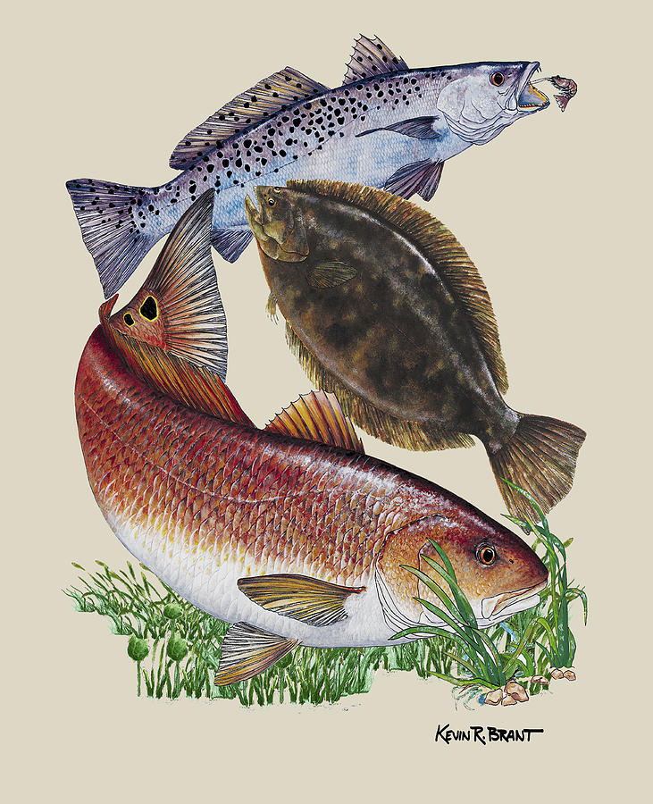 Sea Trout Painting - Inshore Slam N by Kevin Brant