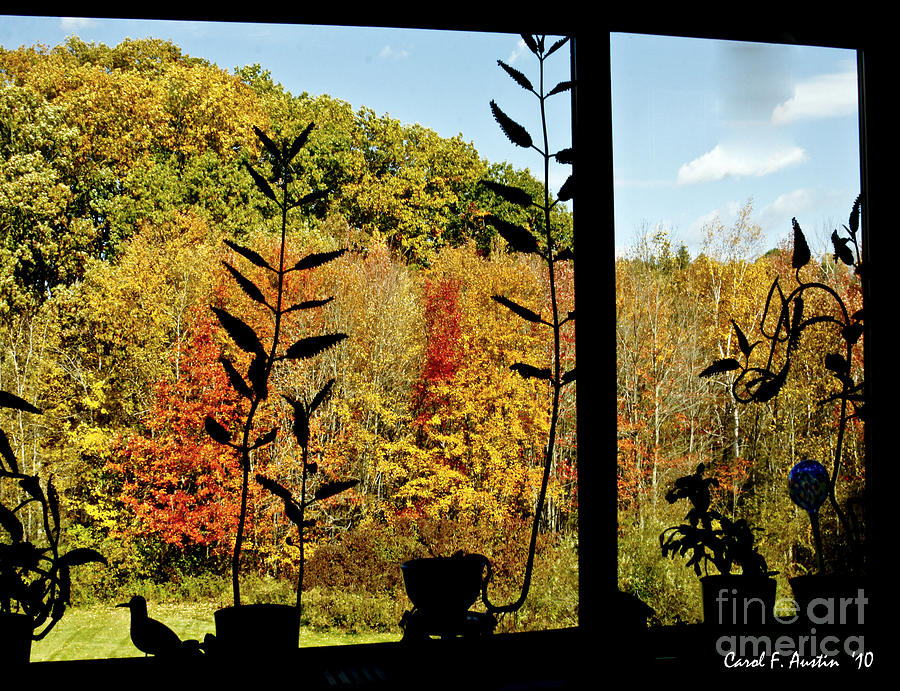 Fall Photograph - Inside Looking Outside At Fall Splendor by Carol F Austin