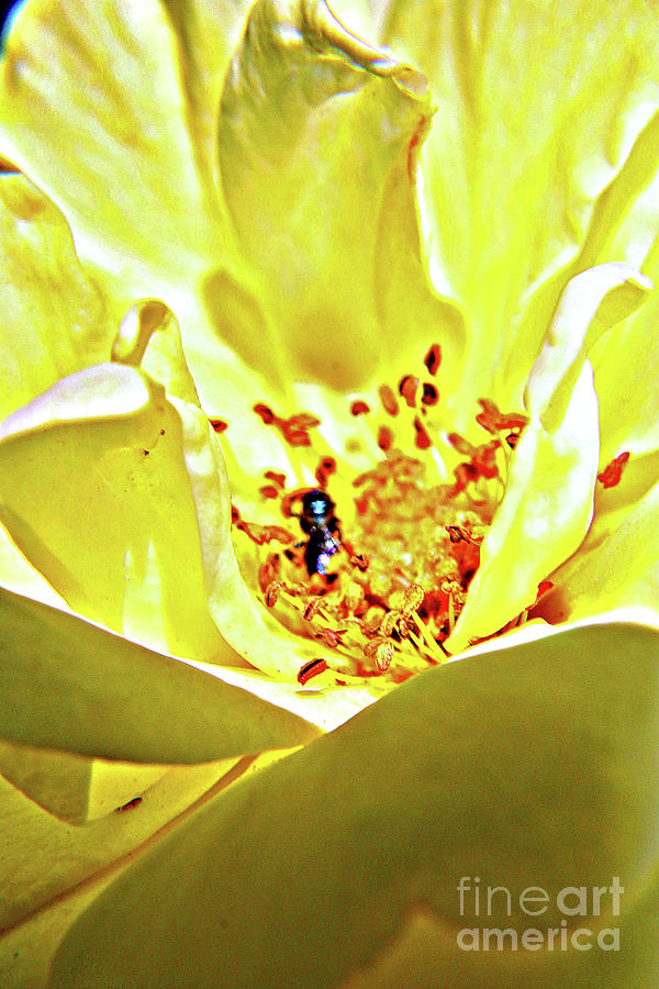 Inside The Natures Blooms Photograph