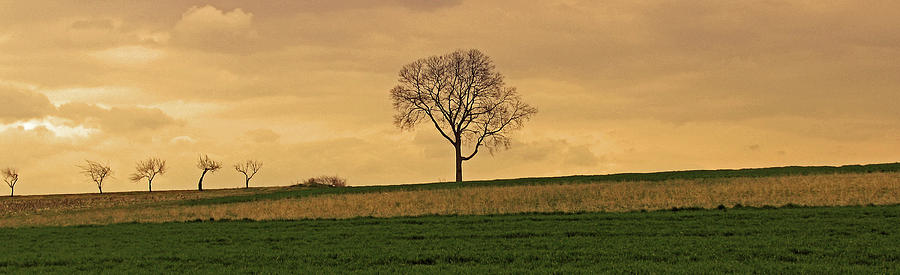 Lone Tree Photograph - Inspiration by Scott Mahon