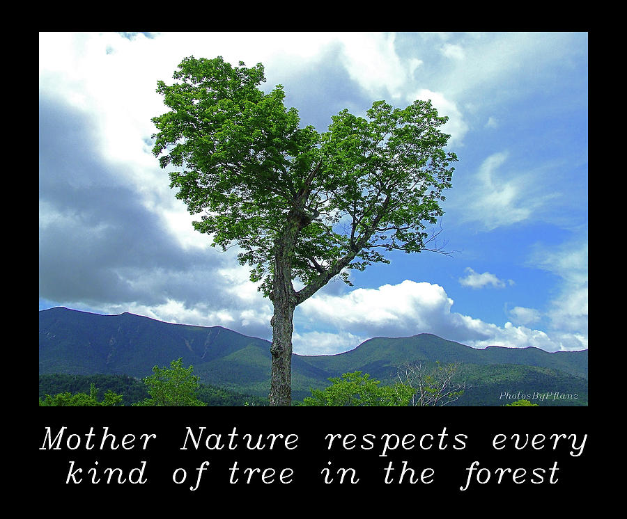 Respect Photograph - Inspirational-mother Nature by Brian Pflanz