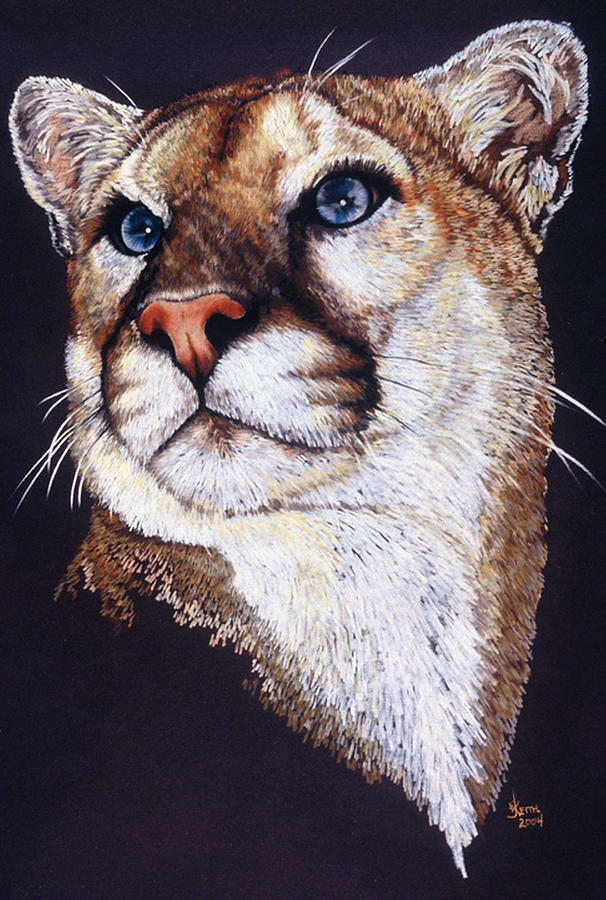 Cougar Drawing - Intense by Barbara Keith