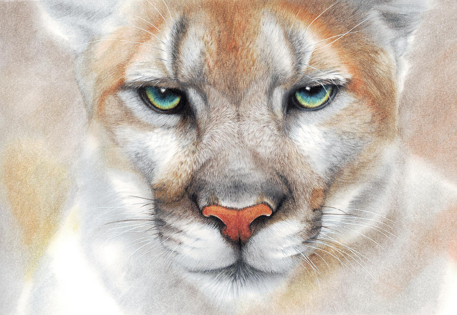 Intensity - mountain lion - puma by Peter Williams