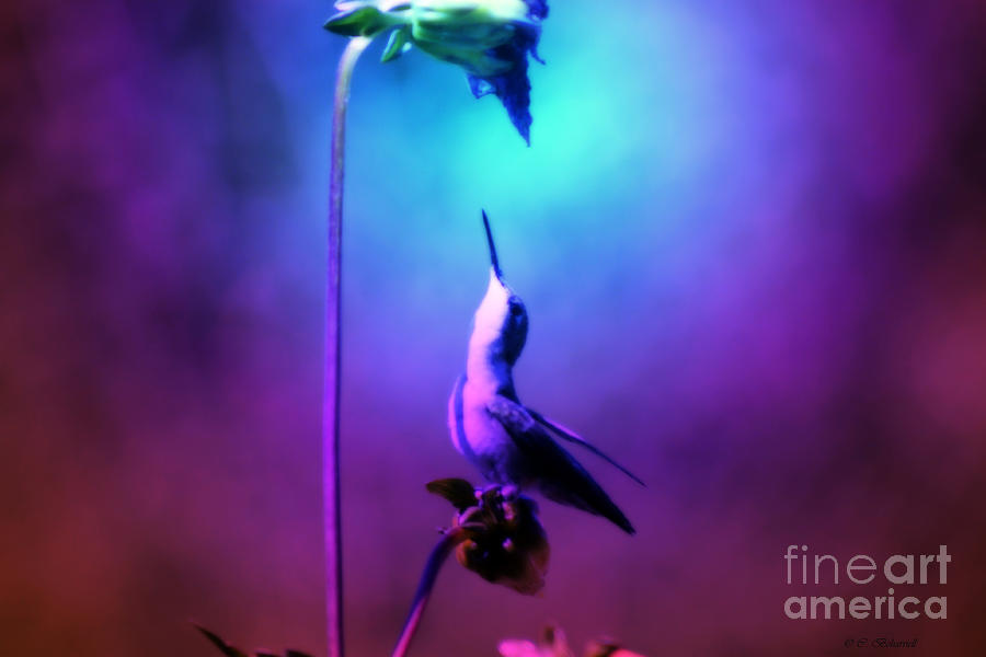 Inner Strength Photograph - Internal Strength by Cathy  Beharriell