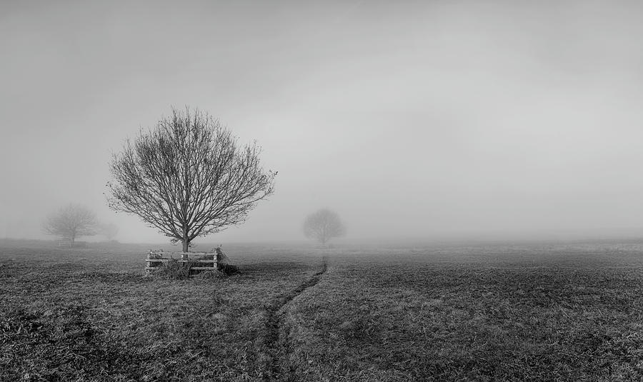 Fog Photograph - Into The Fog by Nick Bywater