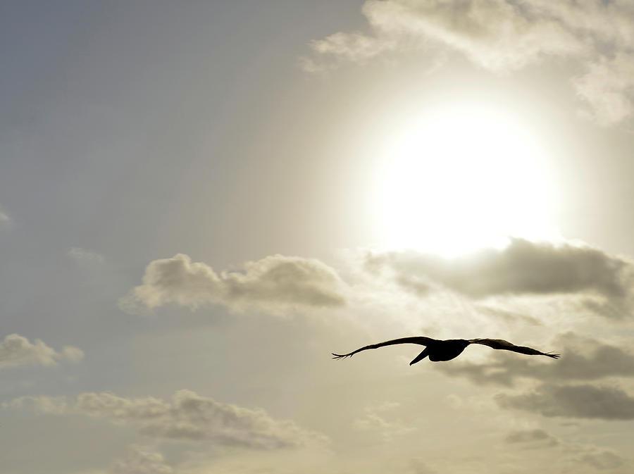 Bird Photograph - Into The Sun by Sebastien Coursol