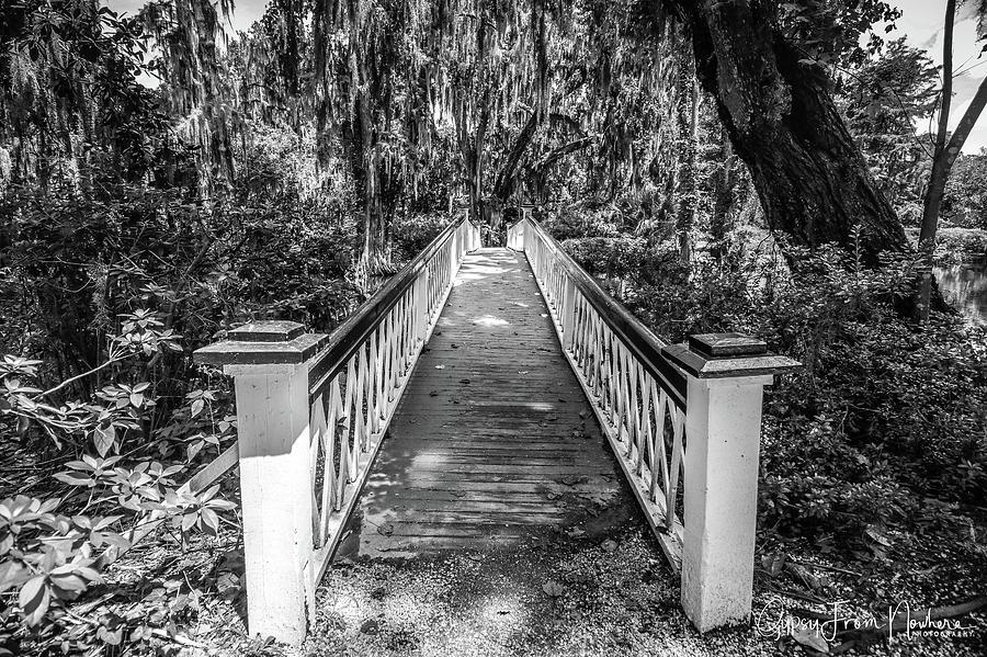 Bridge Photograph - Into The Swamp by Dana Foreman