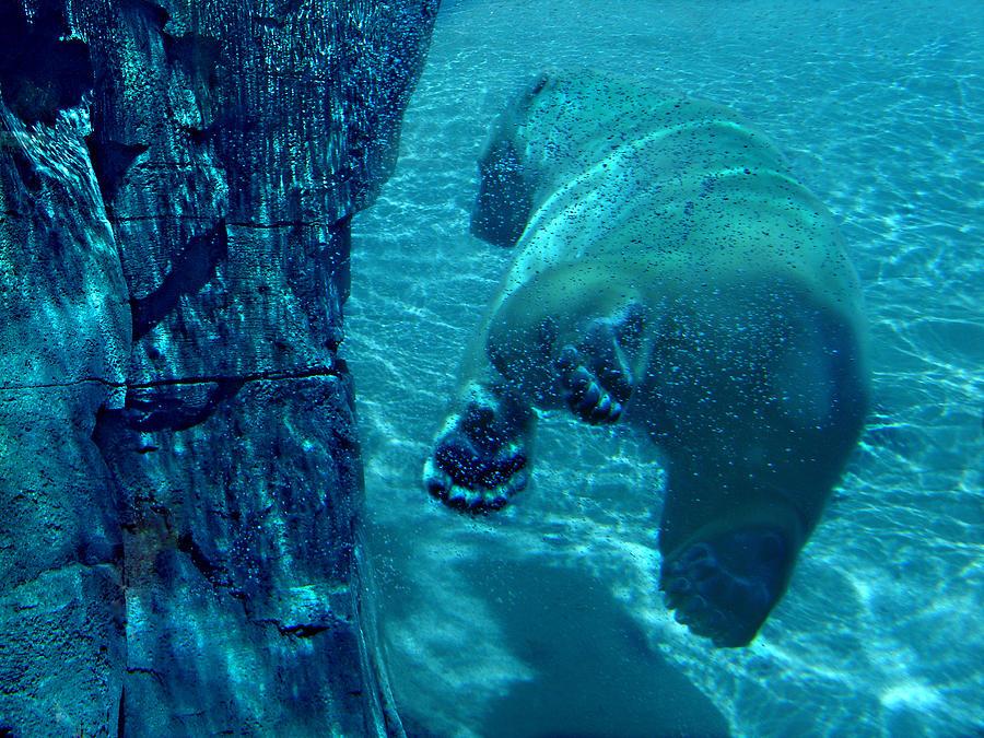 Into The Wild Blue Photograph by Steve Karol