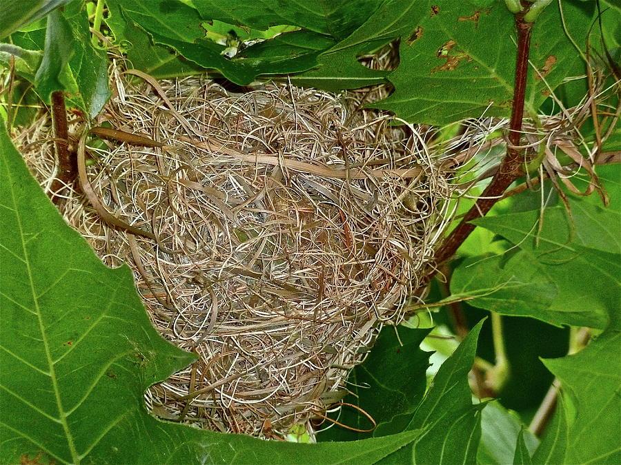Birds Photograph - Intricate Nest by Diana Hatcher