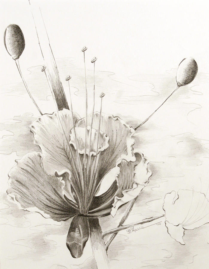 Flower Drawing - Intrigue by Brian Edward Harris