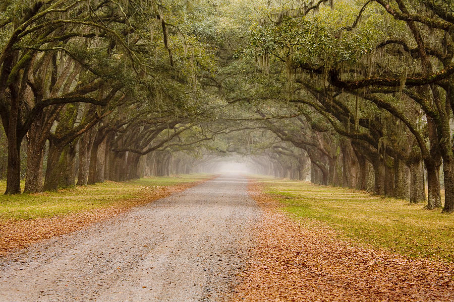 Live Oaks Photograph - Inviting by Eggers Photography