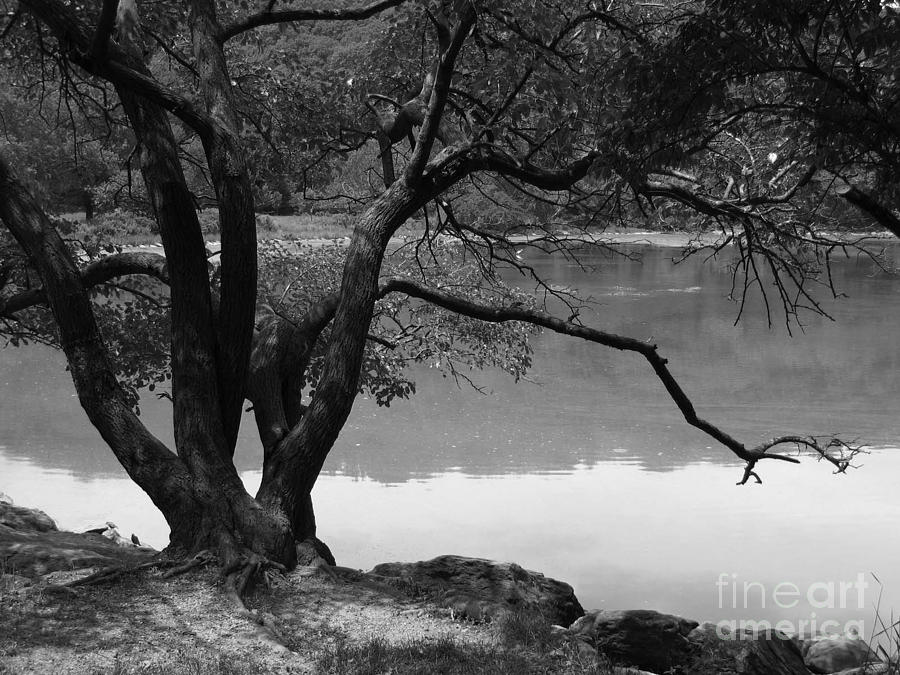 Inwood Hill Park 8A by Amaryllis Leon