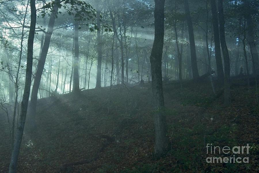 Forest Photograph - Iowa Fog Rays by Sven Brogren