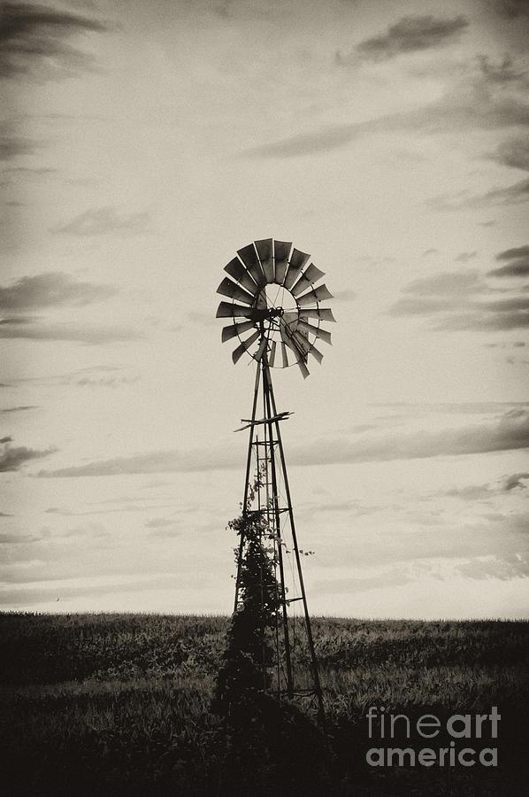 Iowa Photograph - Iowa Windmill In A Corn Field by Wilma  Birdwell