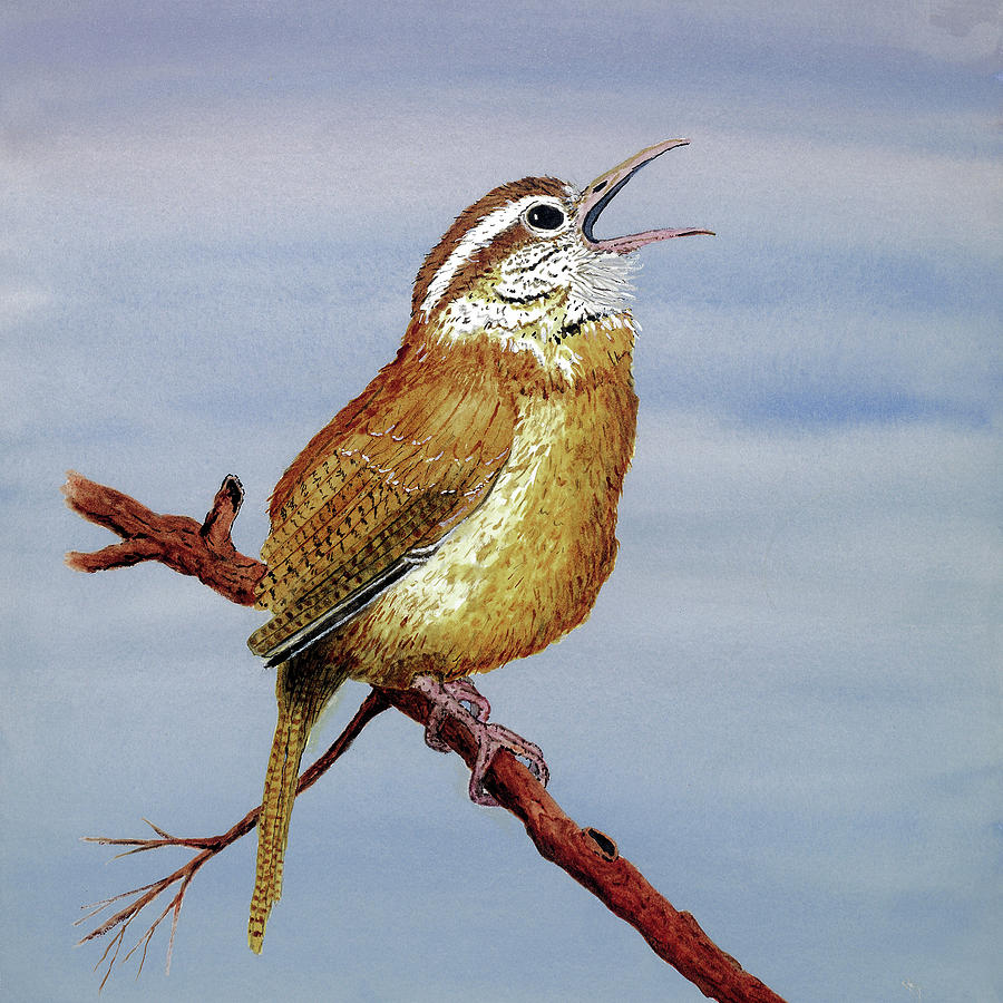 Irate Wren by Thom Glace