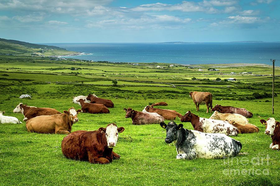 Ireland - Westcoast Photograph