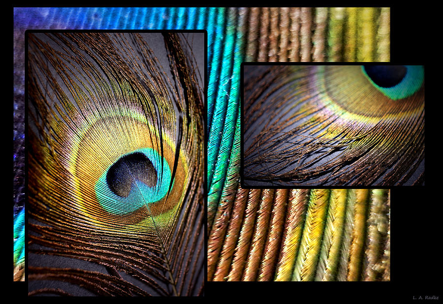 Peacock Feather Photograph - Iridescent Beauty by Lauren Radke