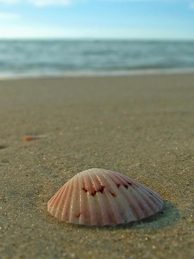 Beach Photograph - Iridescent Seashell by Juergen Roth