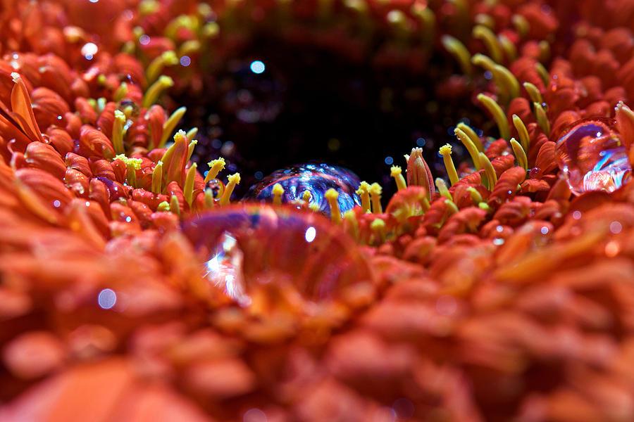 Interior Design Photograph - Iridescent Water Drops by Lisa Knechtel