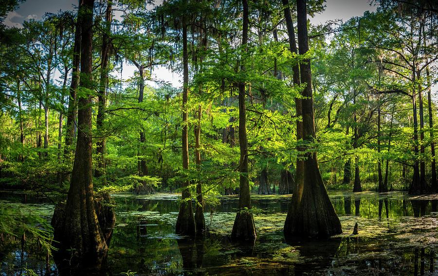 Albany Georgia Photograph - Iridium Paradise by Marvin Spates
