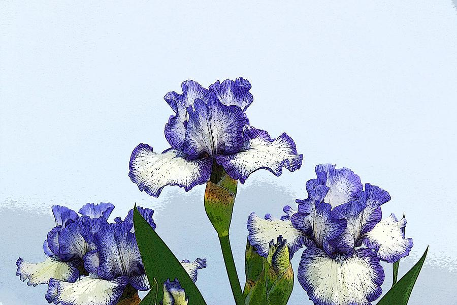 Iris Photograph - Iris 15 by Allen Beatty
