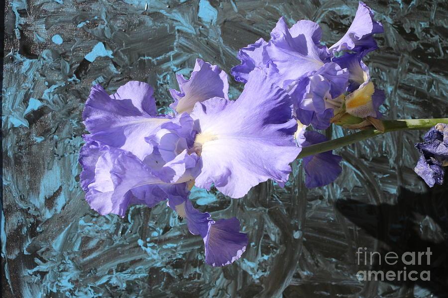 Flowers Photograph - Iris Azulez by Juan Carlos Gonzalez