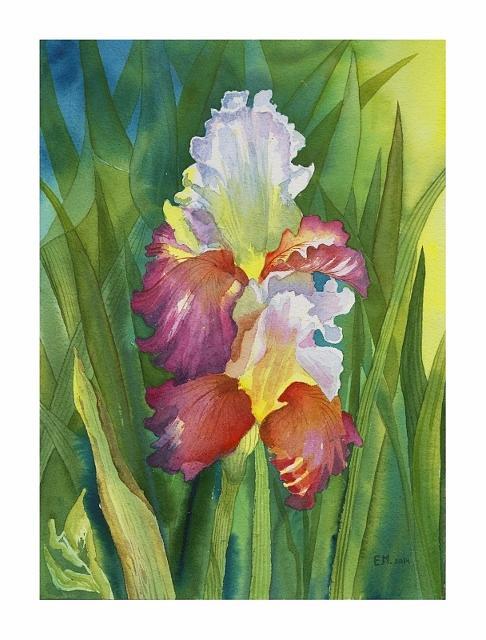 Iris Painting - Iris by Elena Mahoney