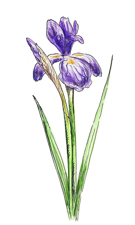 Iris Flower Digitally Printed White Baby Bodysuit