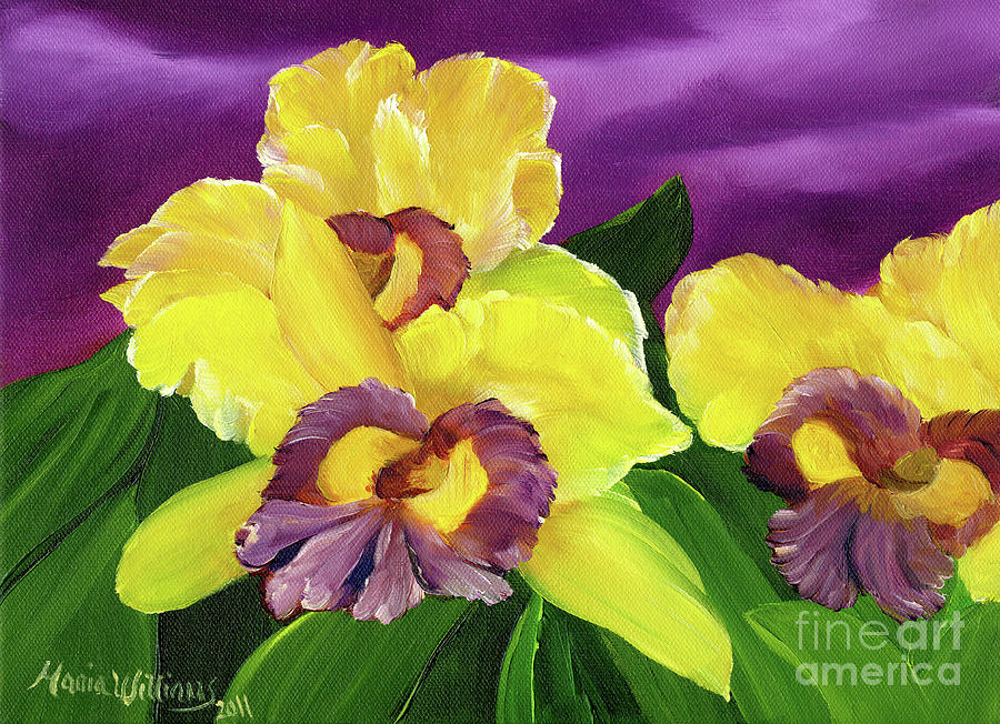 iris flowers painting by maria williams, Beautiful flower