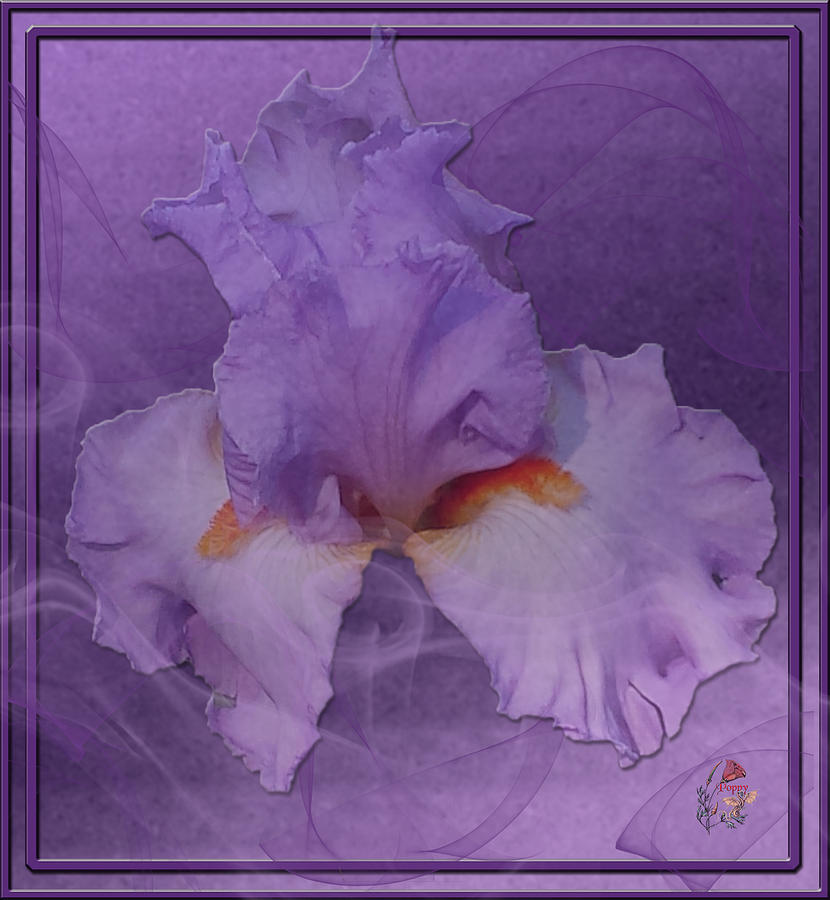 Iris Photograph - Iris From The Mists by Patricia Whitaker