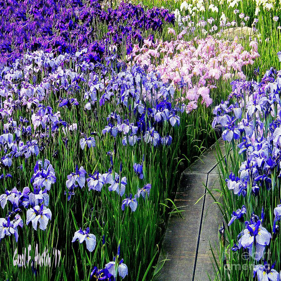 Iris flower garden wall art photograph by carol f austin flower photograph iris flower garden wall art by carol f austin izmirmasajfo