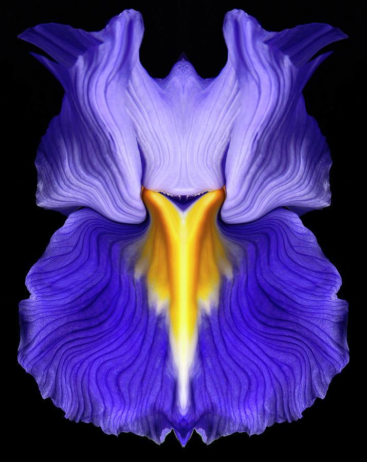 Flower Photograph - Iris by Gary Zuercher
